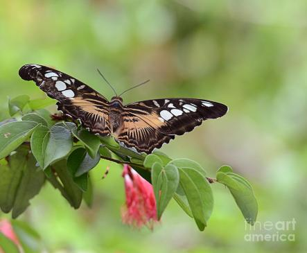 spreading-my-wings-butterfly-maria-martinez